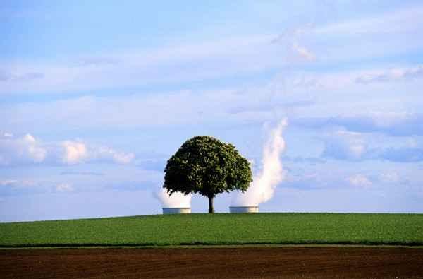 Искусственное дерево, вырабатывающее электричество