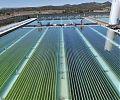 Колорадо выращивает водоросли для биотоплива