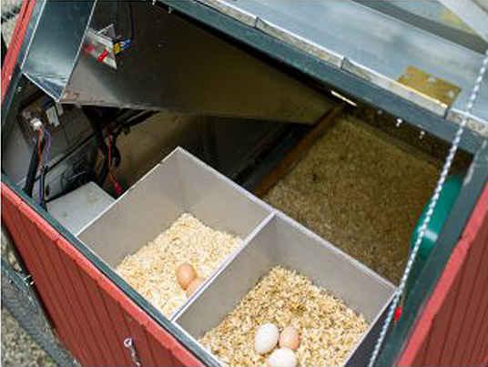 Свежие натуральные яйца
