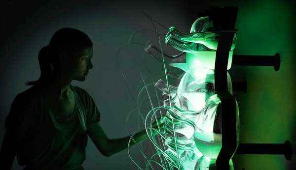 Бактерии - биологический источник света