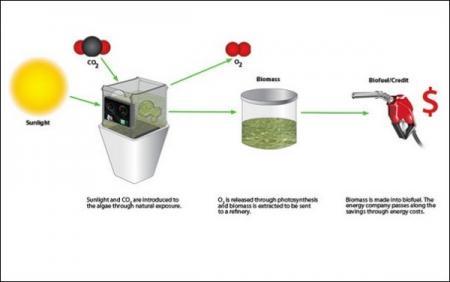 Биореактор-концепт Bio-Grow для получения биотоплива в домашних условиях